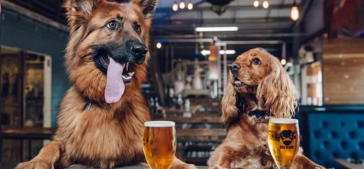 DOG PAWTIES
