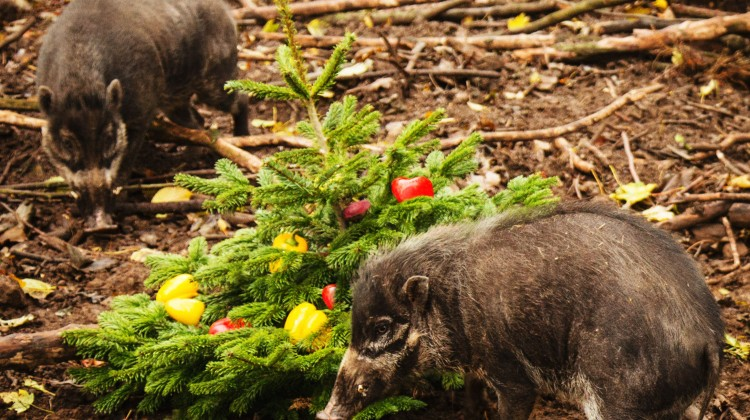 ANIMALS AT LOTHERTON HALL ARE GETTING THE CHRISTMAS SPIRIT