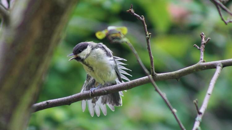 BIRD WATCHING PROJECT ….