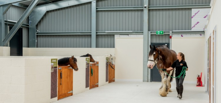 MINING MUSEUM'S PIT PONIES MOVE HOME…